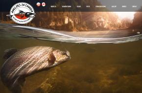 strona internetowe www poznań